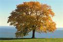 nature - lone tree